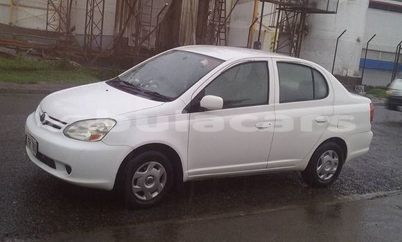 Buy Used Toyota Platz Other Car in Labasa in Northern